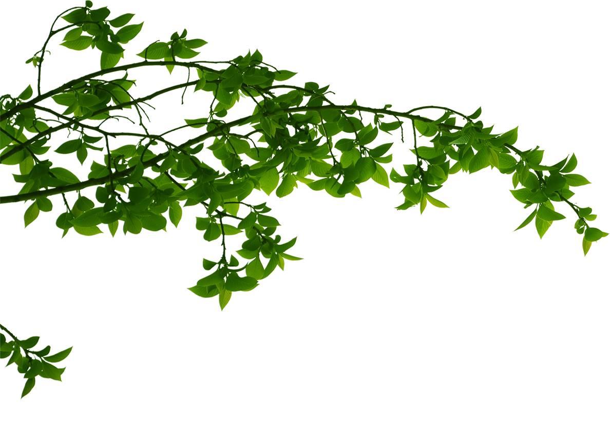 iran medical herb
