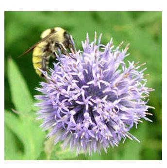 bees making honey - Iran Medical Herb Exporter